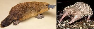imagenes animales australia animales en australia aussieyoutoo viajar estudiar vivir y