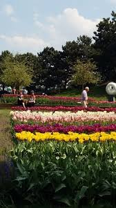 most beautiful tulip garden in this world must visit in