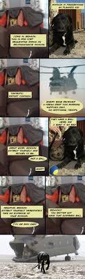 Benson Dog Meme - the ten best dog forts ever