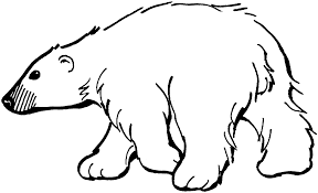 brown bear clipart polar bear pencil and in color brown bear