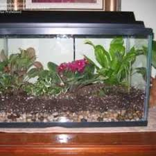 terrariums anything goes dave u0027s garden