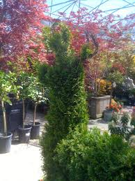 geno u0027s garden design u0026 coaching april 2012