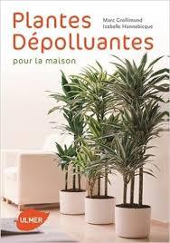 plante d駱olluante chambre plante dépolluante d intérieur conseils prix et recommandations