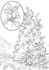american holly coloring page free printable coloring pages