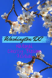 National Cherry Blossom Festival by Best 25 National Cherry Festival Ideas On Pinterest Cherry