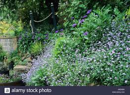 garden wall plants hill side sloping garden myosotis retaining wall steps forget
