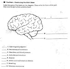 central nervous system worksheet free worksheets library