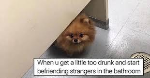Pomeranian Meme - search hilarious memes ebaum s world
