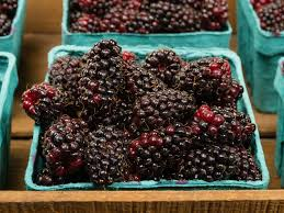 Tree With Fruit That Looks Like Blackberries 15 Lesser Known Berries You Should Try Serious Eats
