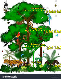 Under Canopy Rainforest by Rainforest Jungle Layers Vector Illustration Vector Stock Vector