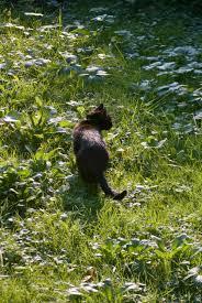 your backyard wildlife habitat rabies in your back yard the