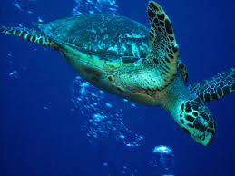 sea turtle conservation interview with see turtles founder brad