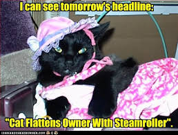 Newspaper Cat Meme - lolcats headline lol at funny cat memes funny cat pictures