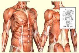 Anatomy And Physiology Midterm Exam Anatomy U0026 Physiology Study Tips U2013 Distance Learning Systems Inc