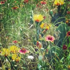 west texas native plants medicinal plants of texas home facebook