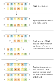 dna proofreading and repair article khan academy