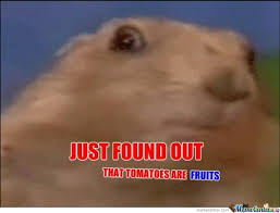 Dramatic Squirrel Meme - dramatic chipmunk memes image memes at relatably com