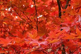 leaves change color fall earth earthsky