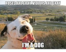 Chemistry Dog Meme - 25 best memes about chemistry cat chemistry cat memes