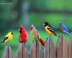 25 colorful birds ideas pretty birds