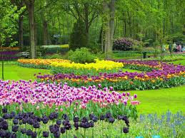 flower garden in amsterdam the most colourful day trip from amsterdam keukenhof gardens