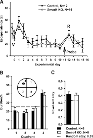 canonical tgf β signaling is required for the balance of