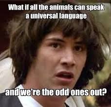 Conspiracy Theorist Meme - conspiracy theory keanu reeves meme on animals speaking a