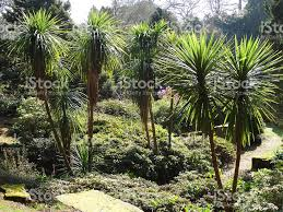 Tropical Rock Garden Image Of Rock Garden With Palm Trees Cordylines Tropical Palms