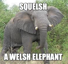 Elephant Meme - meme creator elephant meme generator at memecreator org