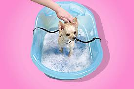 Dogs In The Bathtub The Best Dog Bathtub Pet Gear Review 2017
