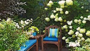 Fertilizer For Flowering Shrubs - select and care for flowering shrubs