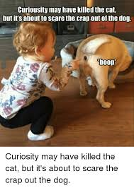 Scared Cat Meme - curiousity may have killed the cat but its aboutto scare the crap