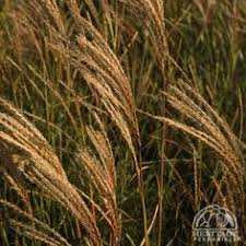toronto garden winter ornamental grasses by garden muses a