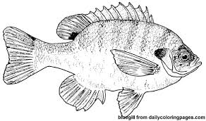 dailycoloringpages images texas bluegill fish coloring pages