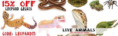 Backyard Reptiles Buy Reptiles All Captive Bred Guaranteed U0026 Shipped Same Day Ordered