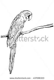 parrot sketch vector graphics monochrome blackandwhite stock