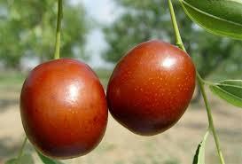 fresh dates fruit fresh dates importers with best taste buy dates fruit