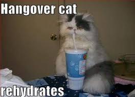 Drunk Cat Meme - funny cat memes archives page 949 of 983 cat planet cat planet