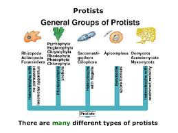 03 6 kingdoms prokaryote u0026 eukaryote