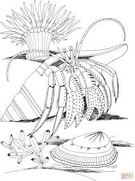 hermit crab halloween costume halloween crab coloring page free printable coloring pages
