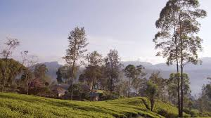 ceylon tea trails youtube