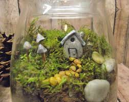 terrarium kit with tiny house glow in the dark mushrooms and