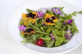 Edible Flowers Flowers List