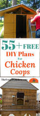 107 best coop building plans images on pinterest backyard