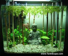 Asian Themed Fish Tank Decorations 8 Household Items Begging You To Turn Them Into Aquariums
