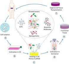Tissue Renewal Regeneration And Repair Controlled Delivery Systems For Tissue Repair And Regeneration