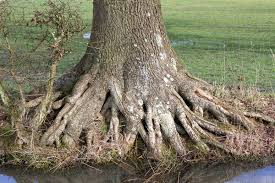 free stock photos rgbstock free stock images tree roots