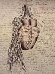 Leonardo Da Vinci Human Anatomy Drawings Leonardo Da Vinci Drawings Fine Art Blogger Leonardo Da Vinci