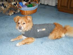 thundershirt the best dog anxiety treatment