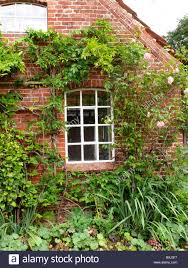 brick house facade detail climbing plants house residence